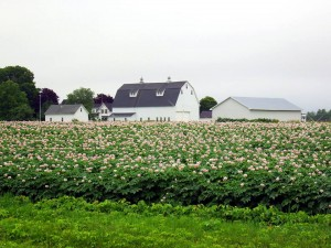 houlton me farms