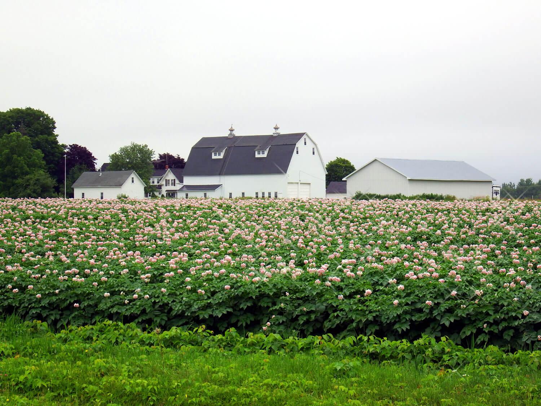 maine barn farm property