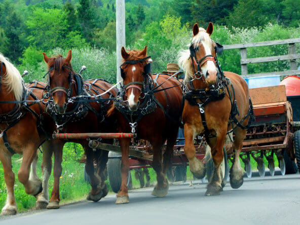 amish in maine settlements